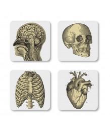Curios Biology Coasters